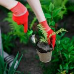 garden maintenance by a woman.